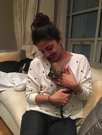 Priyanka_Chopra_cuddling_her_new_puppy.jpg