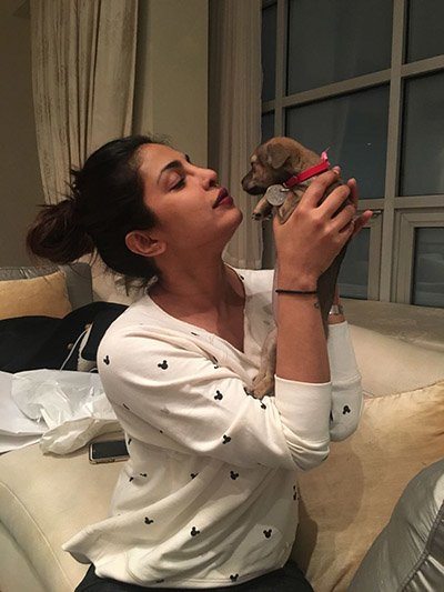 Priyanka_Chopra_with_her_new_puppy.jpg
