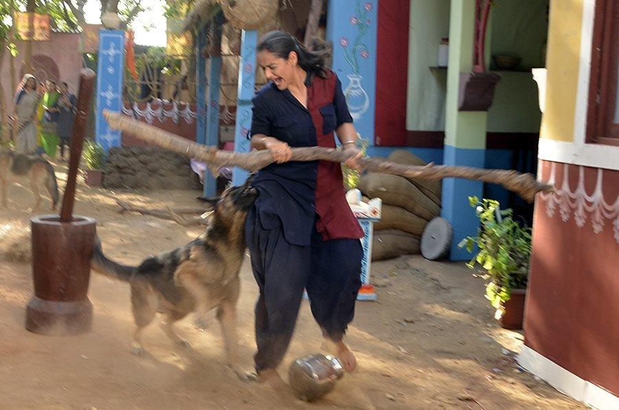 prachi tehlan bitten by a german shepard dog