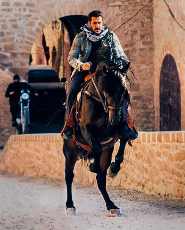 salman khan rides a horse in tiger zinda hai