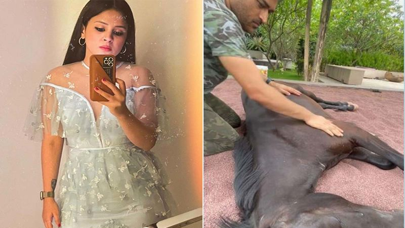 MS Dhoni's Wife Sakshi Treats MSD Fans With A Soul Soothing Video; Has The Cricketer Comforting A Horse