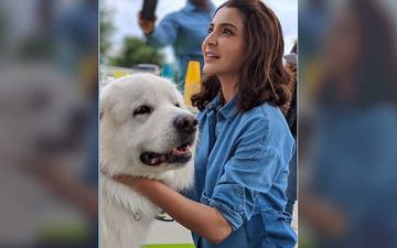 Anushka Sharma Requests Fans To Note The Time Allotted By Mumbai Police To Feed Stray Animals During The Lockdown
