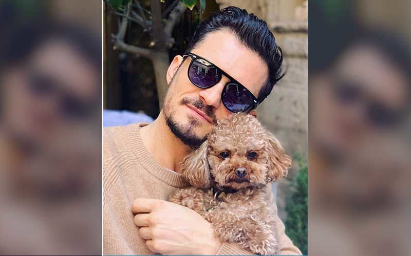 Orlando Bloom Offers Reward For Katy Perry And His Missing Pooch Mighty; Actor Reveals He's Already 'Heartbroken'