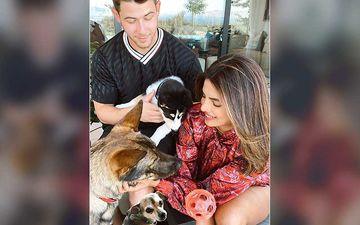 Priyanka Chopra Jonas And Hubby Nick Jonas Welcome Pet Dog Panda; Actress Shares New Family Portrait