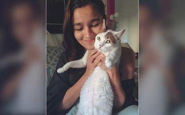 Alia Bhatt's Pet Cat Sheeba Passes Away; Actor Drops An Emotional Post; Says A Final Goodbye To Her 'Angel'