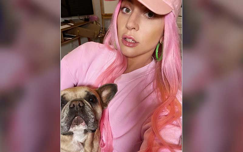 Lady Gaga Offers Half-A-Million Dollars In Return Of Her Stolen French Bulldogs, After Her Dog Walker Gets Shot-REPORT