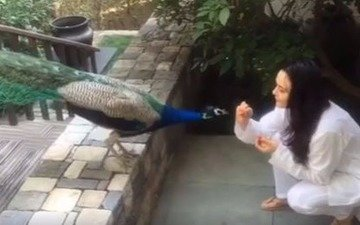 Watch: Preity Zinta feeding a peacock