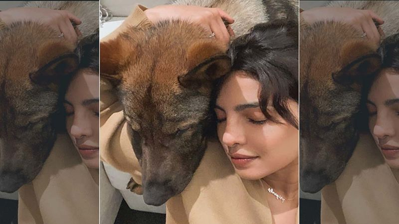 Priyanka Chopra Drops An Adorable Picture With Pet Dog Gino, Sends 'Virtual Hugs' As India Fights Against COVID-19