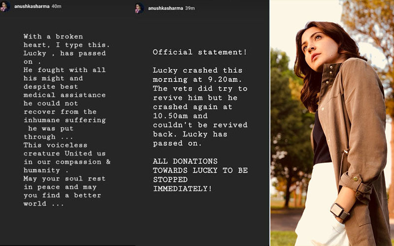 Anushka Sharma Is Heartbroken As She Informs About The Passing Away Of The Mumbai Dog, Lucky, Who Was Brutally Beaten Last Week
