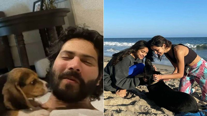 Varun Dhawan Chills At Home With His Baby While Ananya Panday Hits The Beach With Her PAWsome- Take A Look