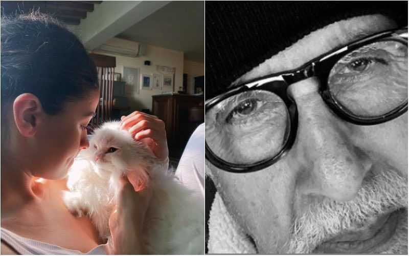 Alia Bhatt Shares A Cuddly Picture With Her Pet; Brahmastra Co-Star Amitabh Bachchan Says 'I Don't Like Cats', Later Deletes Comment