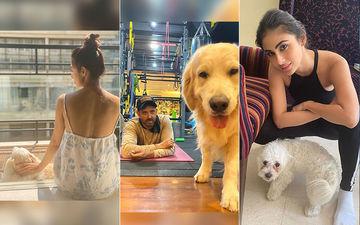 Alia Bhatt, Priyanka Chopra, Hrithik Roshan, Arjun Kapoor, Malaika Arora Obsess Over Their Pets During Quarantine Period