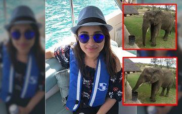 Parineeti Chopra Amused By An Elephant's Sweet Gesture, Shares Video On Social Media