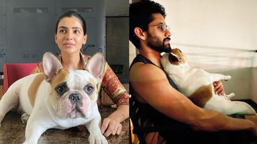 Samantha Akkineni Shares 'Family Portrait' Of Her Yoga Session With Hubby Naga Chaitanya And Pet Dog; All We Can Say Is, Goals - PIC
