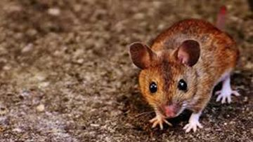 After COVID-19 Battle 'Hantavirus' Kills Man In Yunnan Province; Read On To Know All About This Virus Originated In China