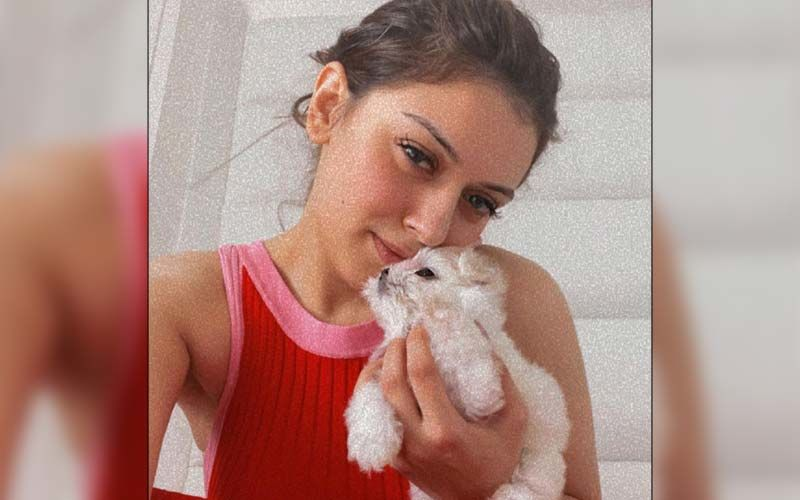Hansika Motwani Welcomes Her Newest Family Member Her Pet 'Teddy Motwani'