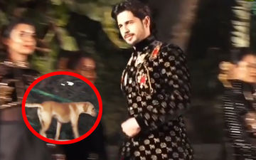 Oops! Sidharth Malhotra's Ramp Walk Hijacked By A Dog- Watch The Hilarious Video