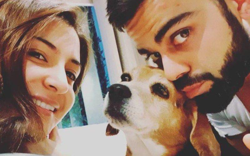 Virat Kohli's Foundation Takes 'First Step' Towards Animal Welfare; Thanks Wife Anushka Sharma For Inspiring Him
