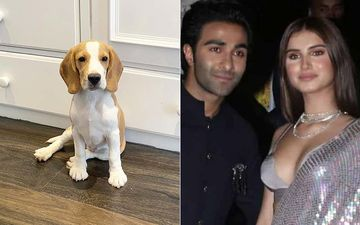 Tara Sutaria Welcomes A Tiny Beagle Home, Names Him Bailey; This Has An Aadar Jain Connect - Read On