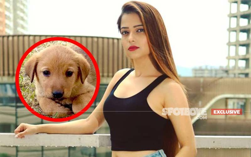 Death Of Humanity! 45-Day-Old Puppy Slaughtered In Actress Pooja Singh's Building; Disturbed Actress Says, 'The Crime Is So Big That I Couldn't Keep Away From Raising My Voice'- EXCLUSIVE
