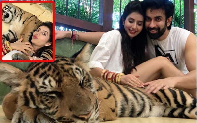 Rajeev Sen-Charu Asopa Trolled For Posing With A Sedated Tiger During Their Thai Honeymoon