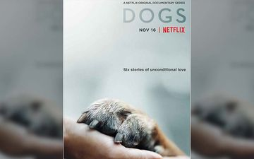 Hidden Gem: Netflix's Show Dogs Is The Perfect Heart-Warming Sunday Watch