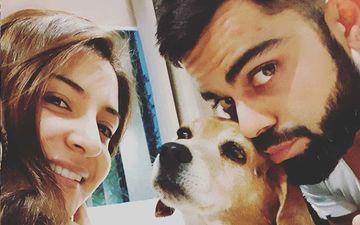 Anushka Sharma And Virat Kohli In Mourning; Couple's Beloved Dog Bruno Leaves For Doggy Heaven, RIP