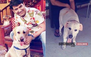 SAD NEWS: Zanjeer, Kapil Sharma's 9-Year-Old Dog Is No More