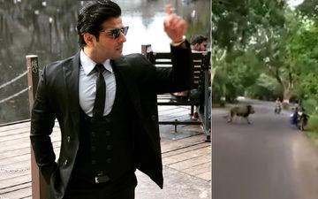 Karan Patel Shares A Video Of A Lion Strolling Across Mumbai's Aarey Road