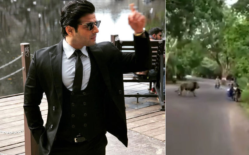 Karan Patel Shares A Video Of A Lion Strolling Across Mumbai's Aarey Road