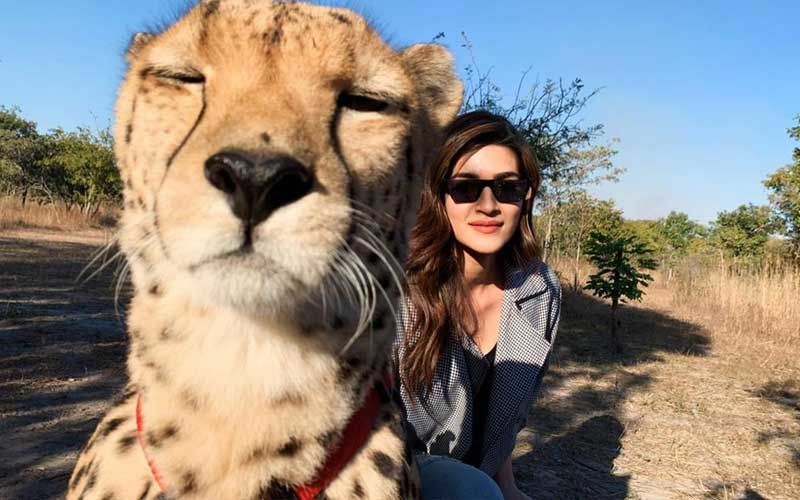 """Kriti Sanon Receives Backlash As She Poses For A Selfie With Cheetah; Trolls Call Her """"Irresponsible"""""""