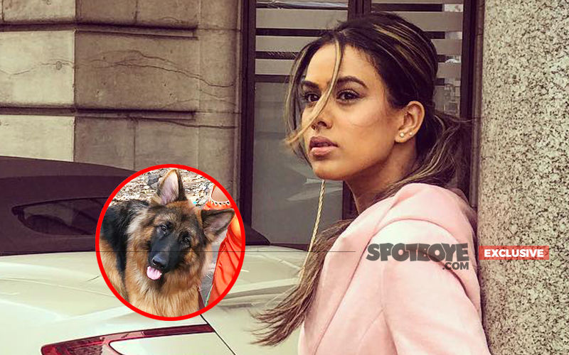 Nia Sharma Attacked By Dogs During Ishq Mein Marjawan Shoot