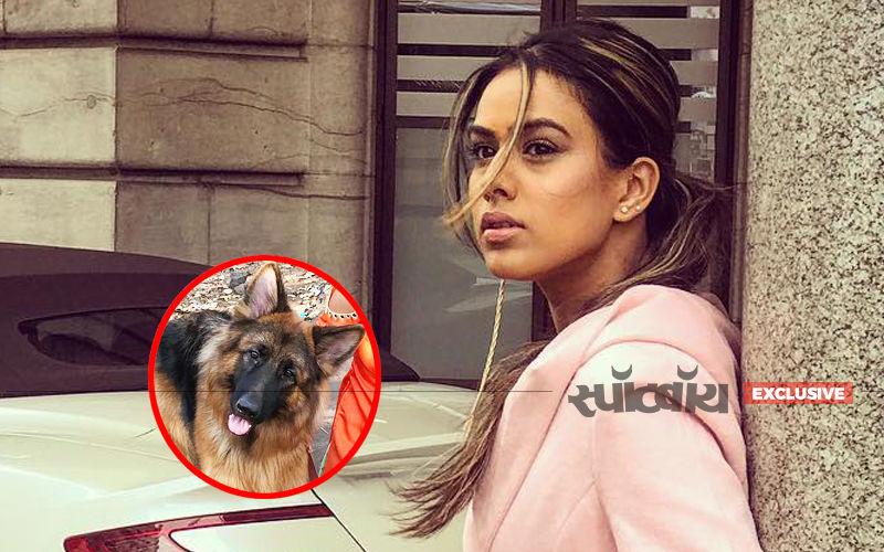 Omg! इश्क में मरजावां की शूटिंग के दौरान निया शर्मा पर कुत्तों ने किया हमला