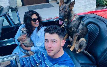 Priyanka Chopra Finally Reunites With Husband Nick Jonas And Pets Gino And Diana After Wrapping Up Matrix 4 Shoot In Berlin