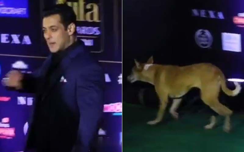IIFA Awards 2019: An Adorable Pup Follows Salman Khan On The Green Carpet; Bhaijaan's Fan Following Knows No Bounds