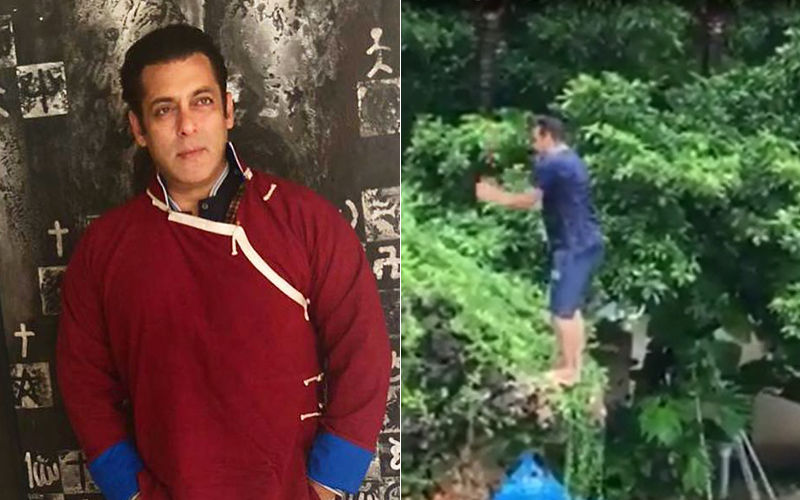 Salman Khan Does The Back Flip Into The Pool And We Can't Keep Calm- Watch Video