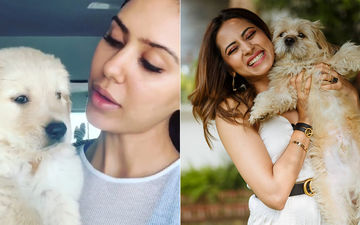 Sonam Bajwa, Sargun Mehta And More - Stars Who Love Their Pets Unconditionally