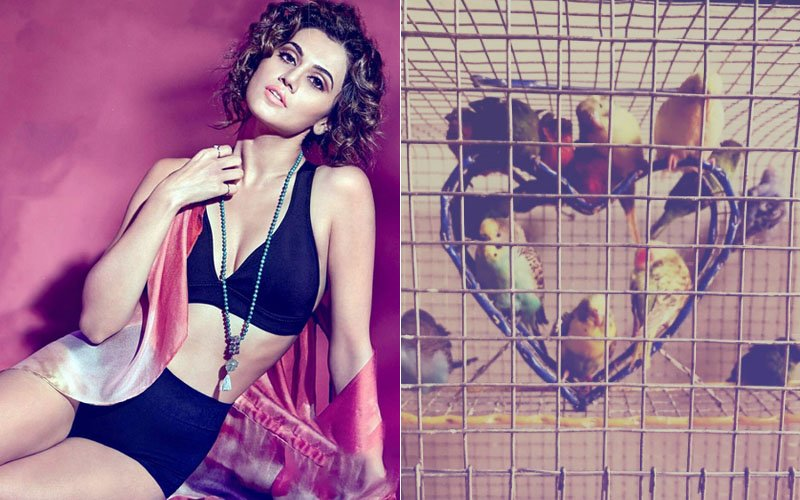 Taapsee Pannu ATTACKED By Trolls For Sharing A Picture Of Caged Birds