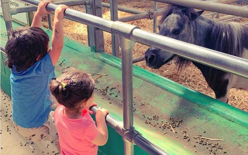 Taimur Ali Khan And Inaaya Hanging Around At A Farm In England Is Too Cute For Words