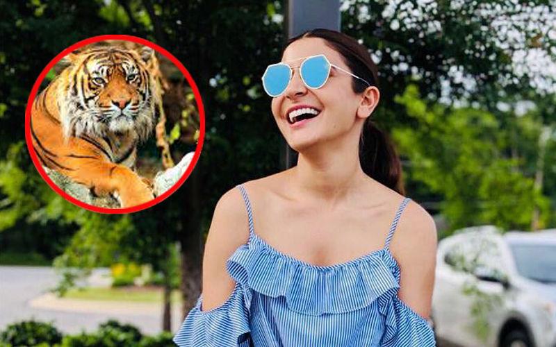 Anushka Sharma Initiates A Campaign To Save Tigers!