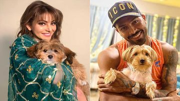 Has Hardik Pandya Gifted Urvashi Rautela A Puppy? The Actress Shares A Pic Of The New Addition In The Family