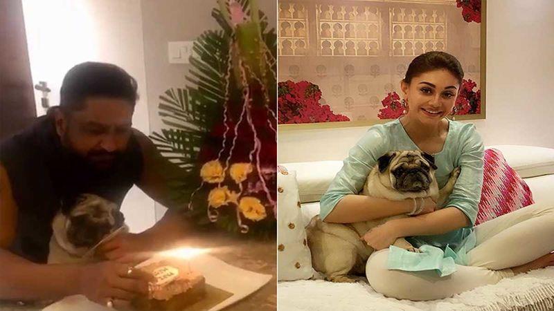 Bigg Boss 13: Shefali Jariwala's Hubby Parag Tyagi And Dog Simba Celebrate Her Birthday In A Special Way- Video