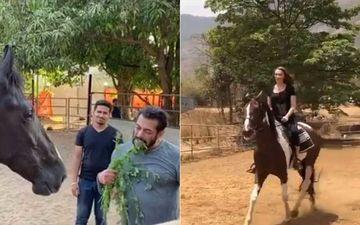 Salman Khan-Iulia Vantur Self Isolating At Panvel Farmhouse? One Enjoys Breakfast Munching Grass And Another Enjoys Horse Riding-WATCH