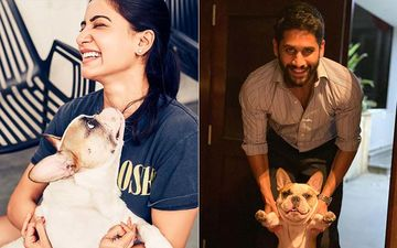 Samantha Akkineni, Naga Chaitanya And Their Pooch Spell #QuaranTeam Goals - Pics